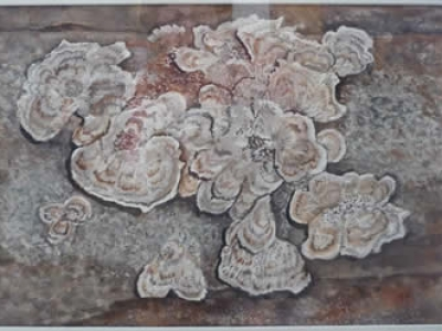 Fungus 2 (watercolour)
